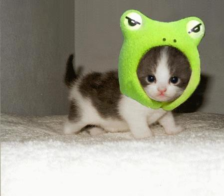 Frog Cat