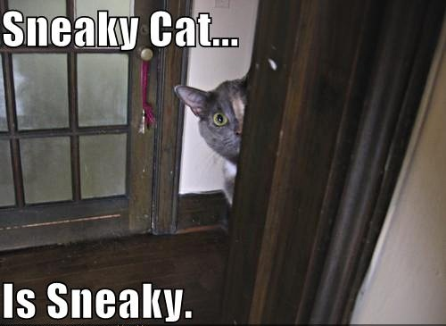 Sneaky Cat